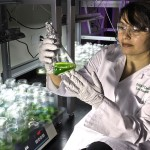 Re-engineering life? The dangers of 'next generation' biofuels