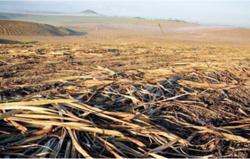 Harvested sugar cane plantation in Brazil.  Photo:  Rettet den Regenwald e.V.