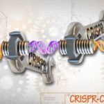 New GMOs are 'not GM' - EU folds under US pressure