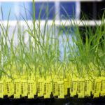 NGOs highlight synthetic biology concerns at CBD side event