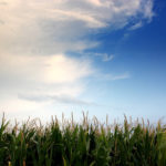 Cashing in on Cellulosic Ethanol: Subsidy Loophole Set to Rescue Corn Biofuel Profits