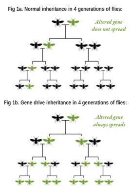 gene-drives