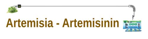 artemisia-header